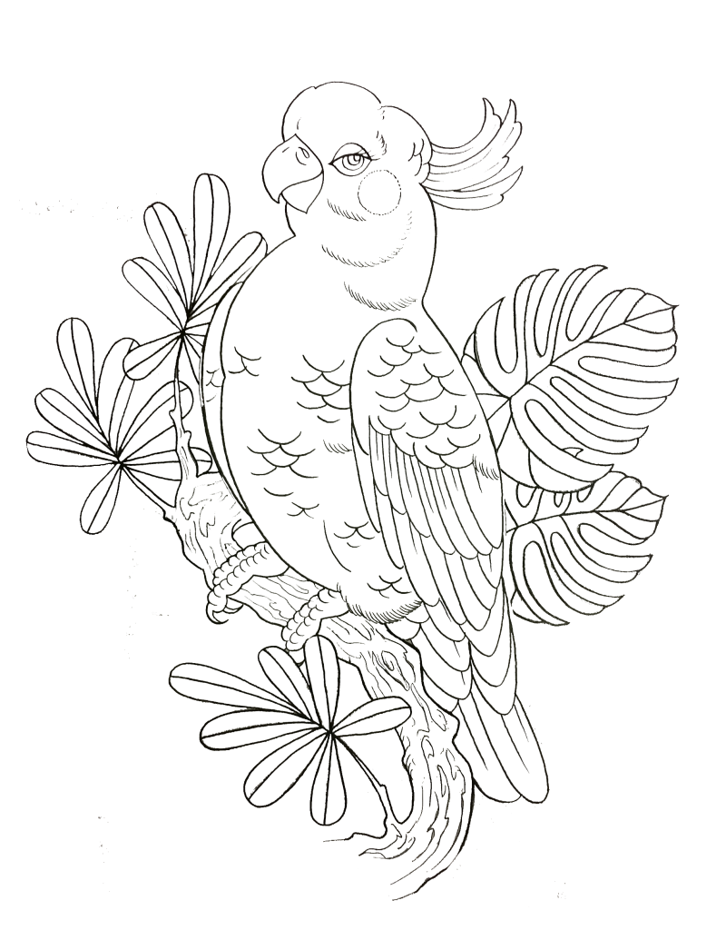 kakadue uten bakgrunn